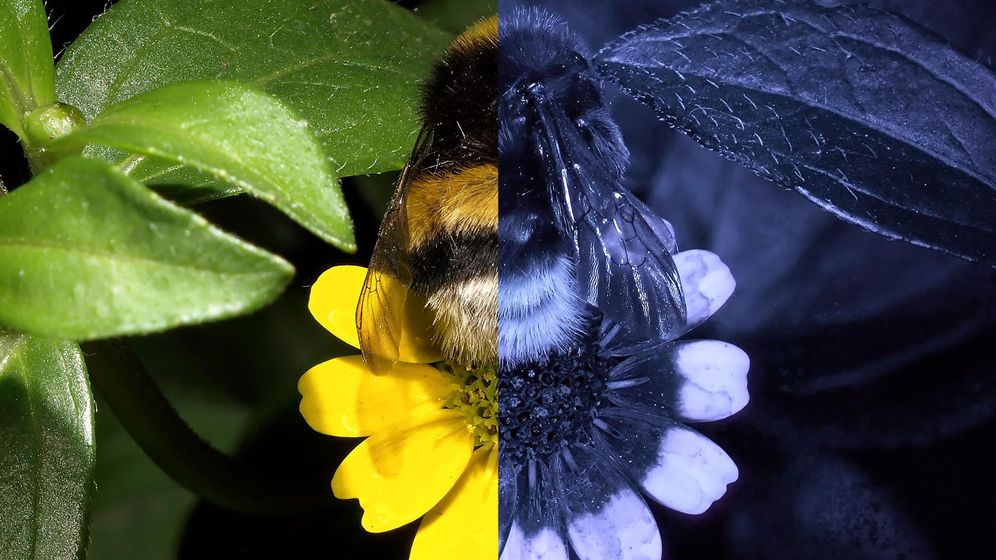 Floral Reflectance Database: Die Insekten-Perspektive