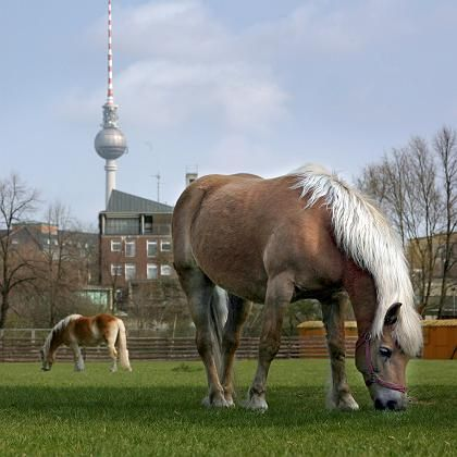 Pferde: Modalitätsübergreifende Wahrnehmung