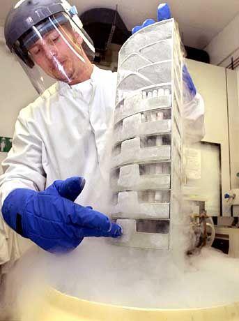 Zellkulturröhrchen mit menschlichen Stammzellen in der Medizinischen Klinik in Lübeck
