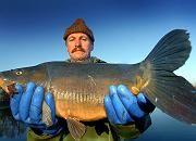 Fisch, Fischgeschmadder - bald komplett vertilgt?