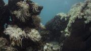 2016 starb knapp ein Drittel der Korallen
