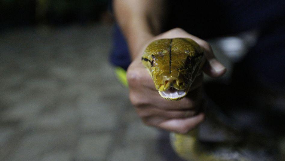 Python (Archiv)