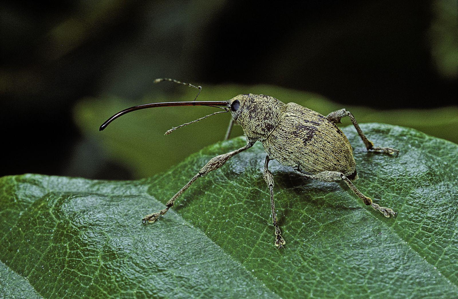NICHT MEHR VERWENDEN! - Klimawandel/ Insekten/ Wanze