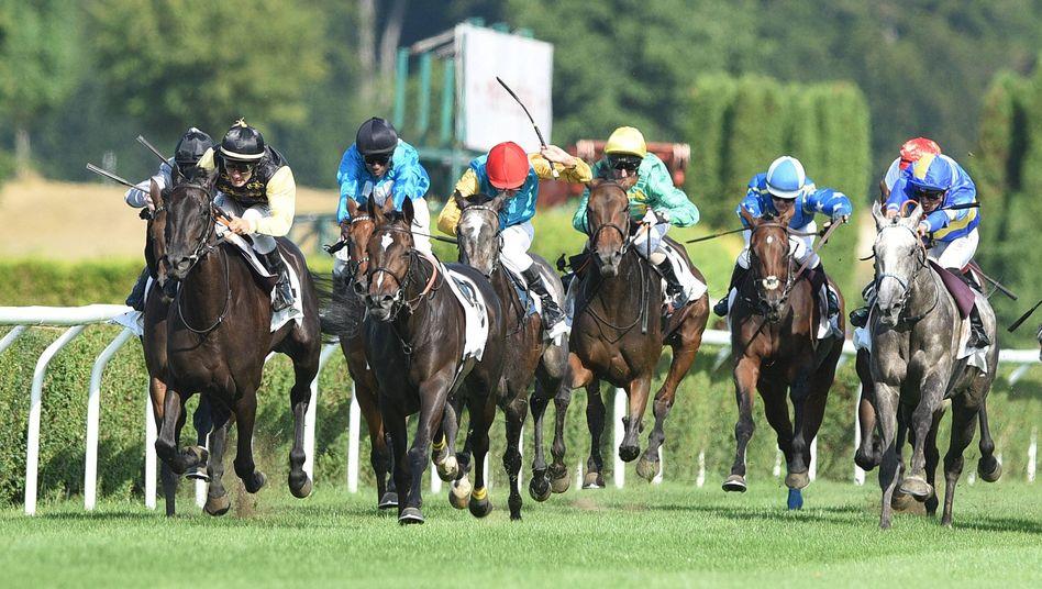 Jockeys und Pferde bei einem Galopprennen in Düsseldorf im August, vorne ein reiterloses Tier