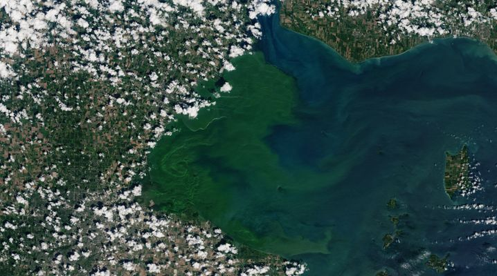 Algenblüte in einem See: Durch wärmere Temperaturen werden sie häufiger.
