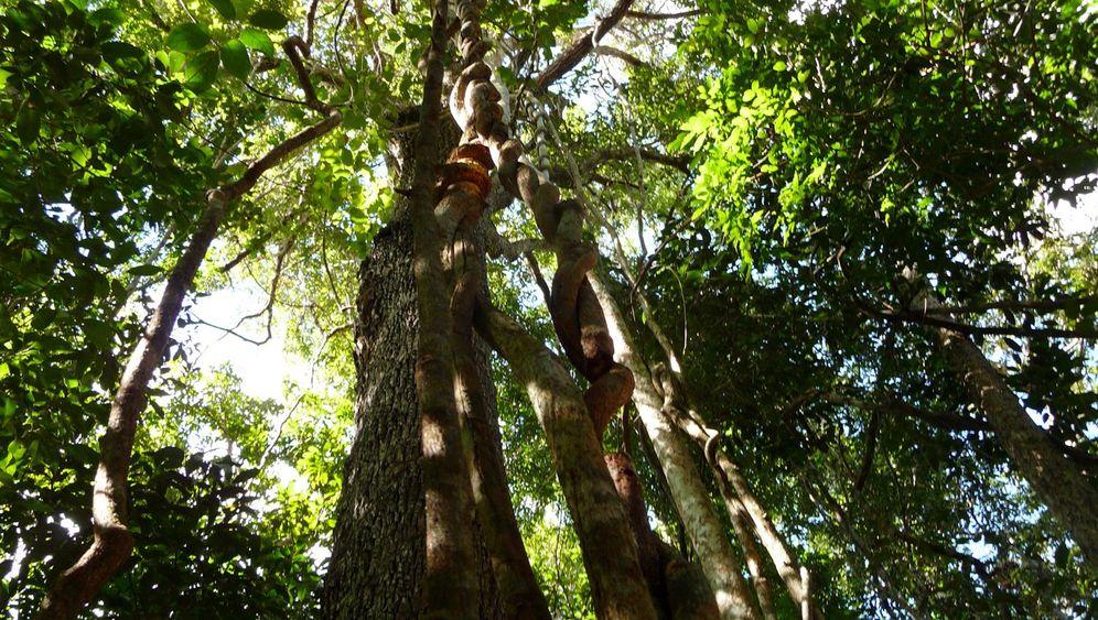 Umweltschützer in Yucatán: Hüter der Mangrovenwälder
