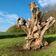 Monolithen aus Holz und Metall – und die Spuren eines Raubes