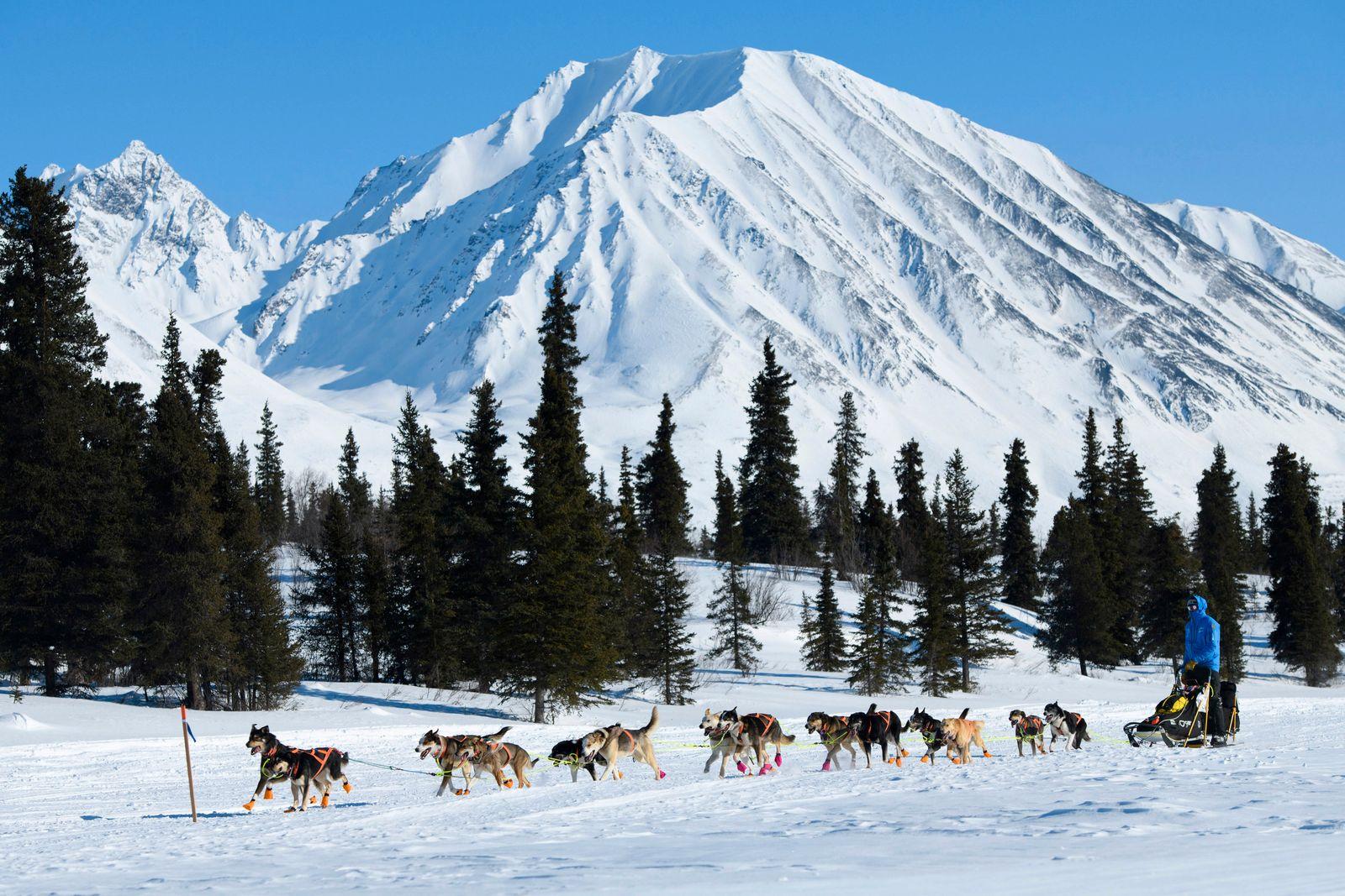 Iditarod Trail Sled Dog Race, Alaska Range, Finger Lake, Rainy Pass, Puntilla Lake