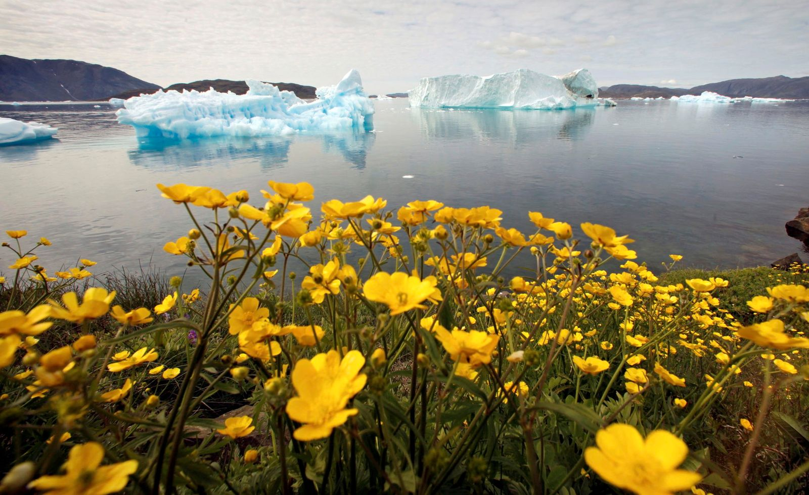 FILE PHOTO: Wildflowers bloom on a hill overlooking a fjord near the south Greenland town of Narsaq
