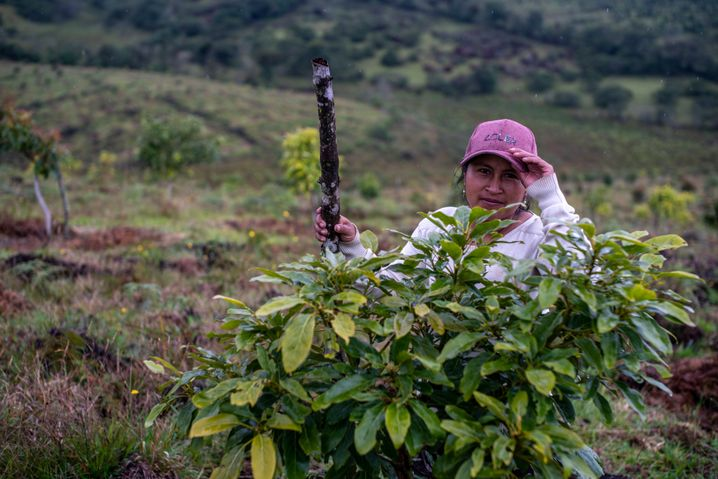 Former fighter Libia Stella Nene is in charge of the avocado plants.