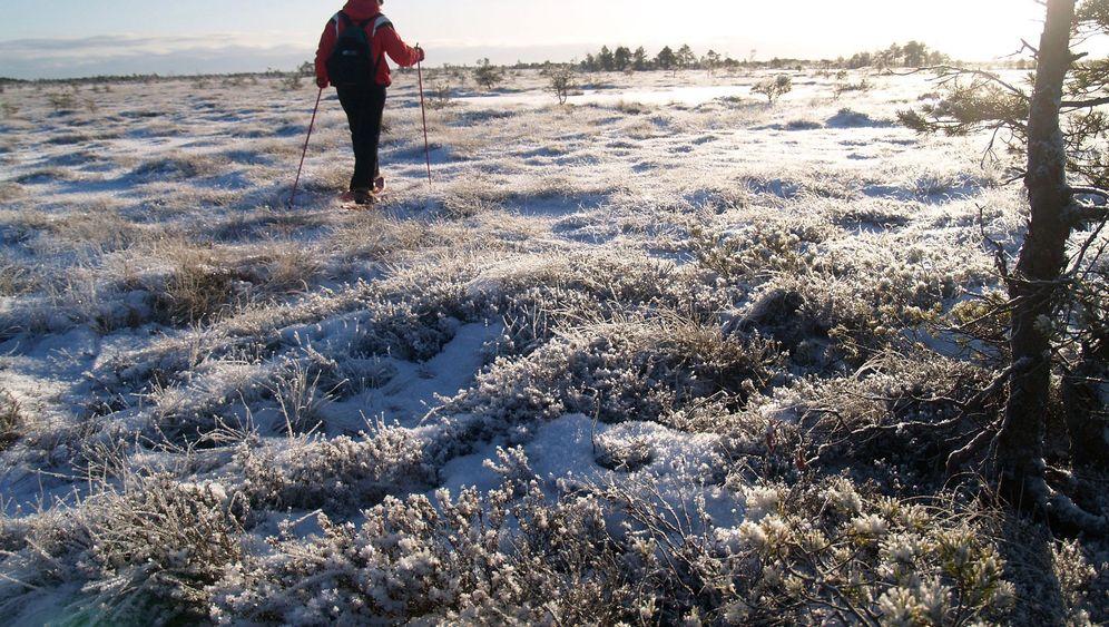 Winterliches Estland: Kicksled und Kolk im Baltikum