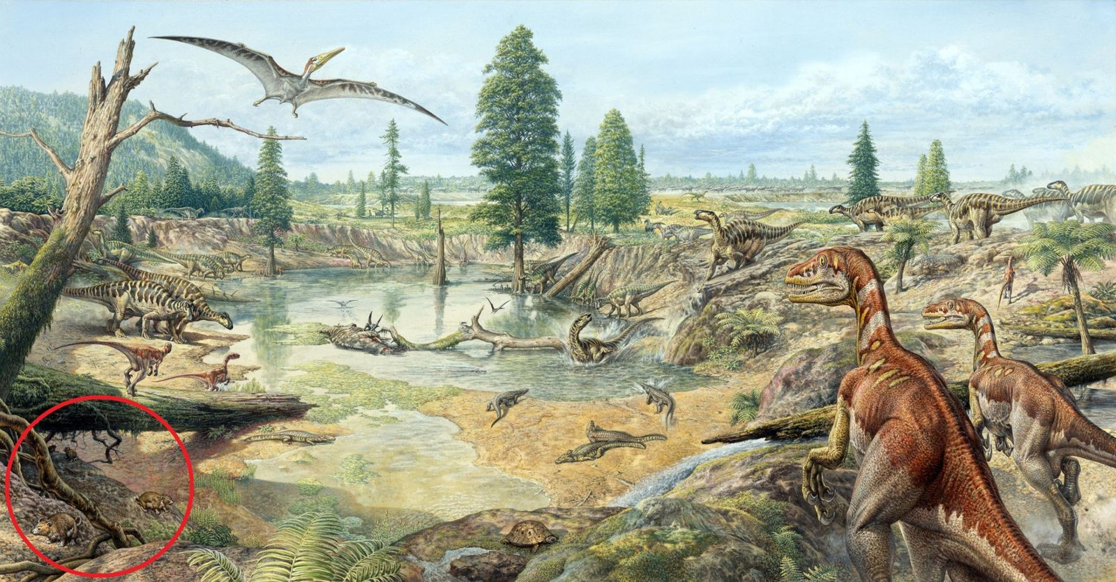fossile Überreste Multituberculata