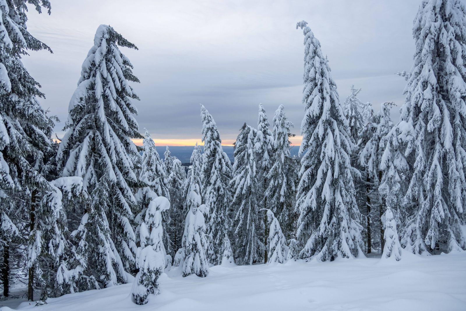 Winter im Taunus 20.01.2021, Schmitten (Hessen): Die Landschaft am Großen Feldberg im Taunus ist weiterhin tief verschn