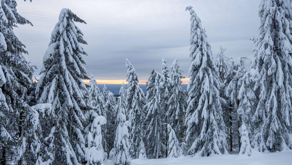 Schnee am rund 880 Meter hohen Feldberg im Taunus: Schneeverwehungen möglich