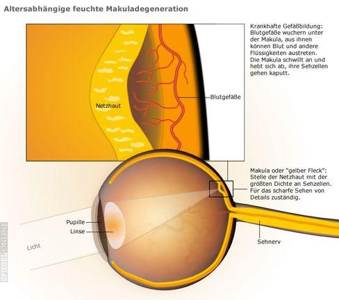 Das retinale Pigmentepithel versorgt die Netzhaut mit Nährstoffen