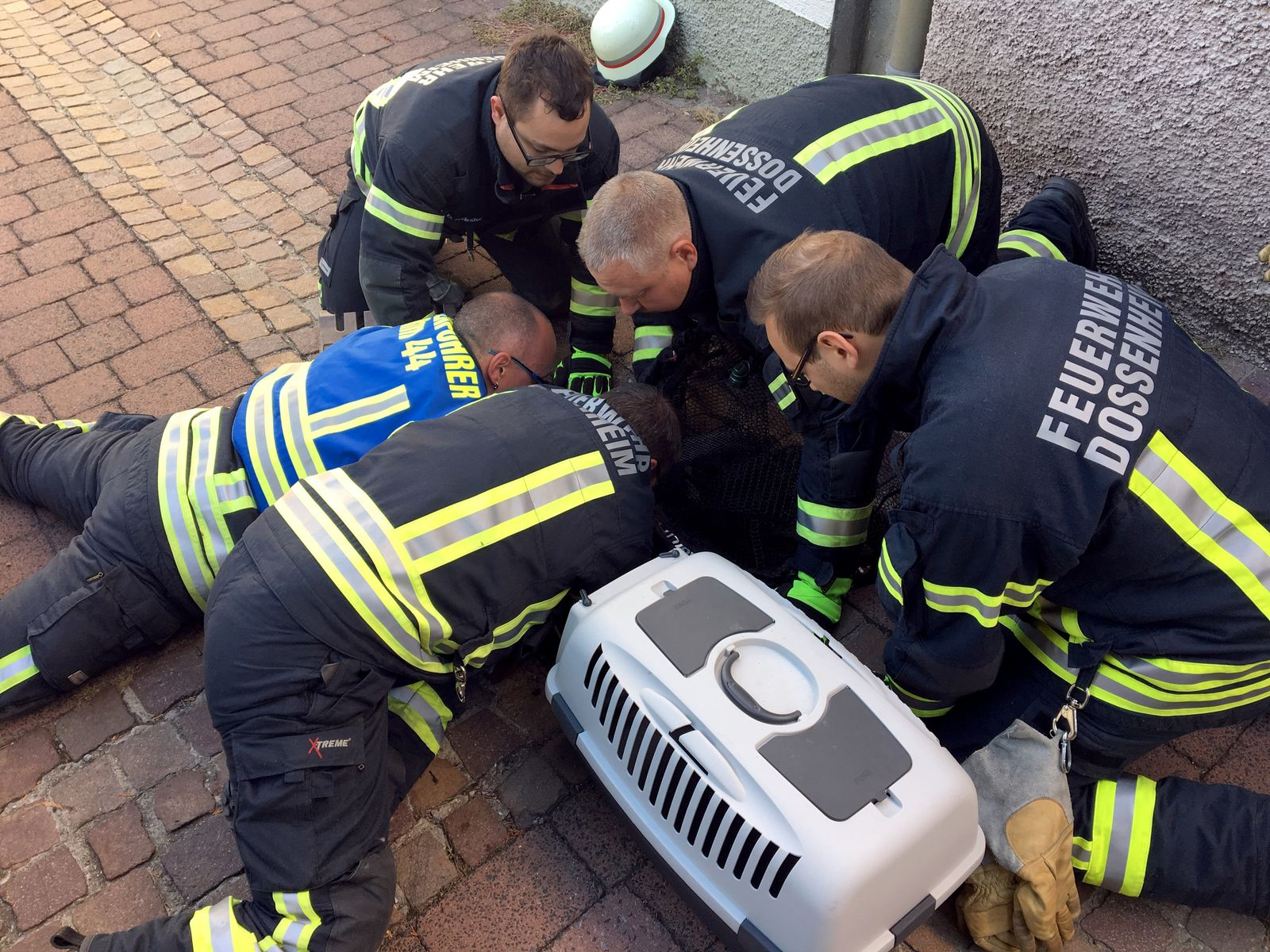 Feuerwehr rettet Kater aus Kanalisation