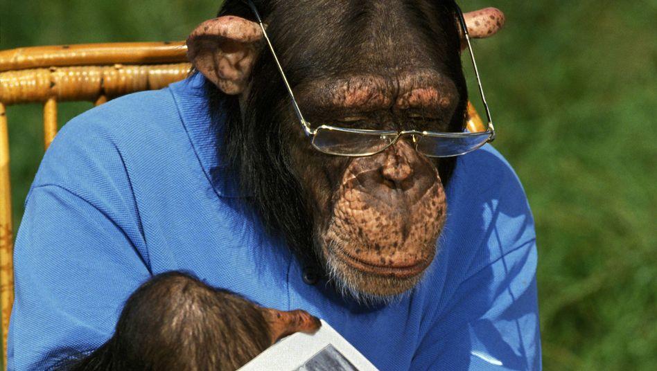 Affe mit Brille