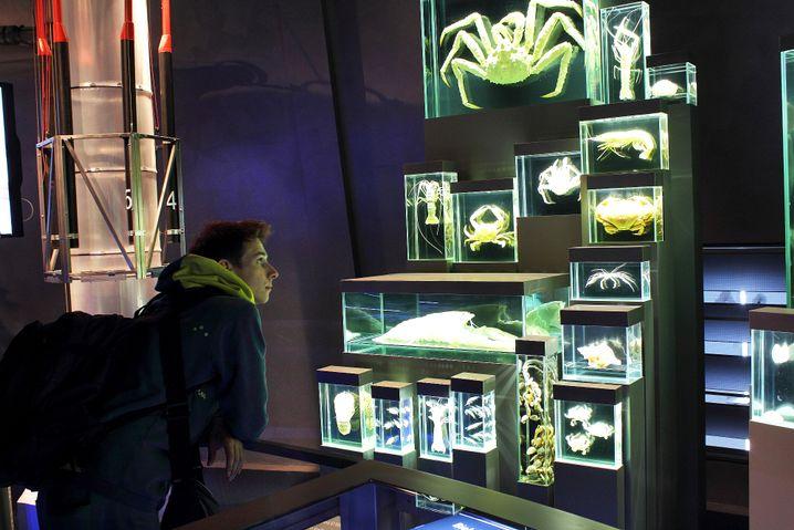 Meerestiere-Master: Bernard Chéret und die Krabbeltiere