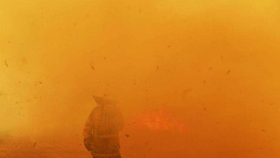 """Feuerwehrleute in Hillville, an der Ostküste des Landes. In Australien hat der Forest Fire Danger Index am Dienstag für die Region Sydney die Stufe """"katastrophal"""" erreicht - erstmals in der Geschichte"""