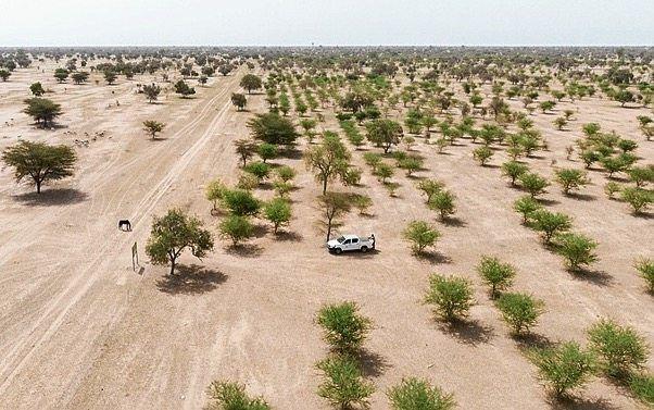 »Grüne Mauer« im Senegal