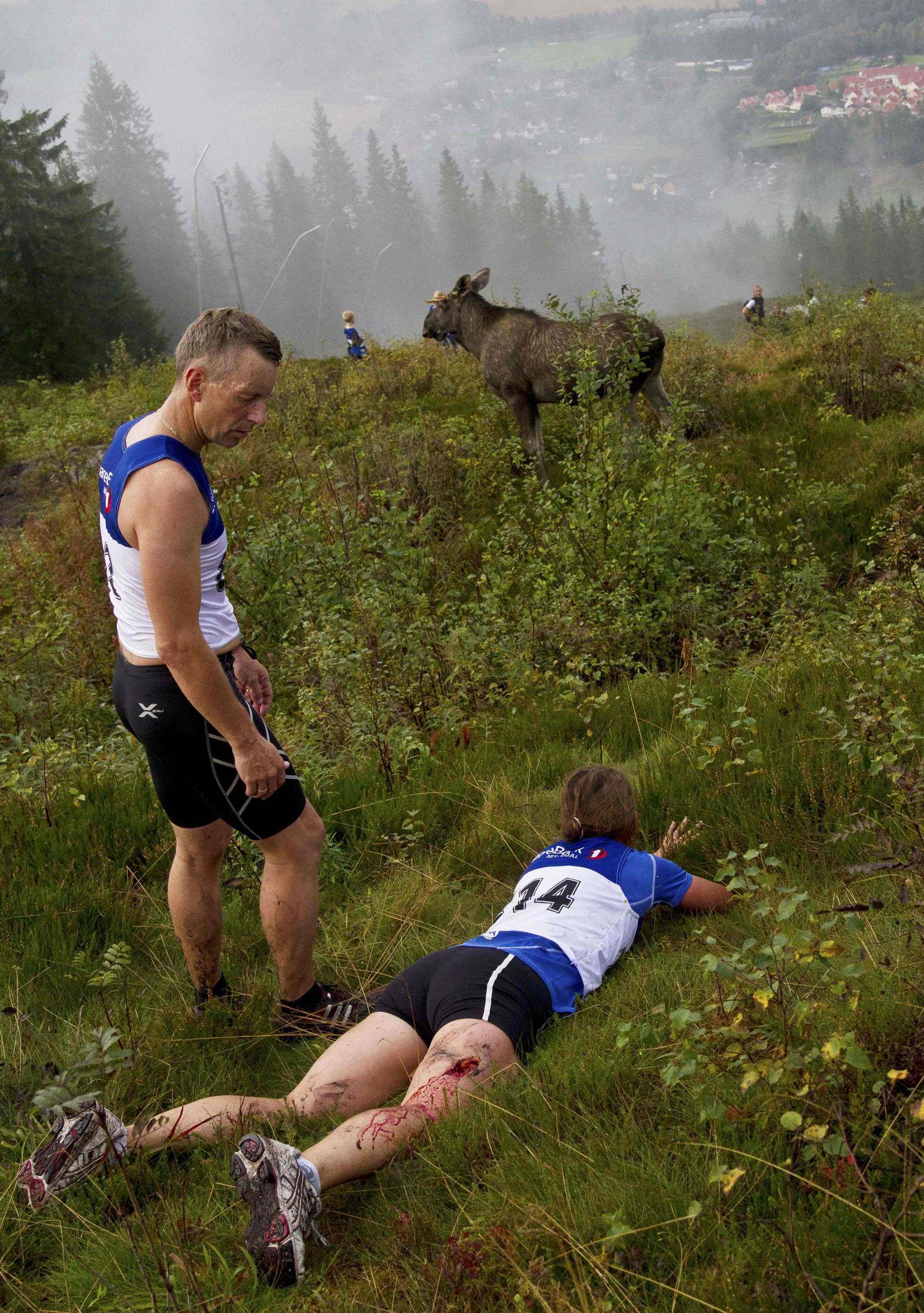 Norwegen/ Lauf/ Elch-Attacke
