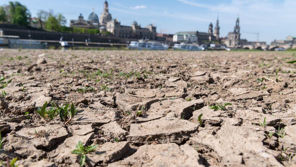 Ausgetrocknetes Elbufer in Dresden: 2019 waren acht von zwölf Monaten in Deutschland zu trocken