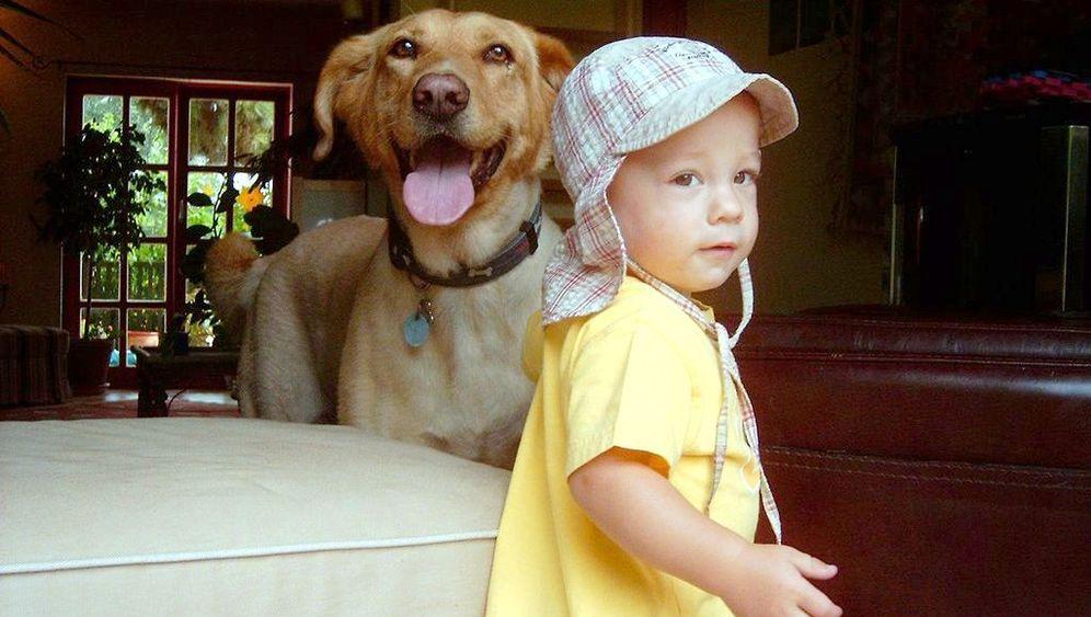 Babys und Hunde: Auf Menschen fixiert