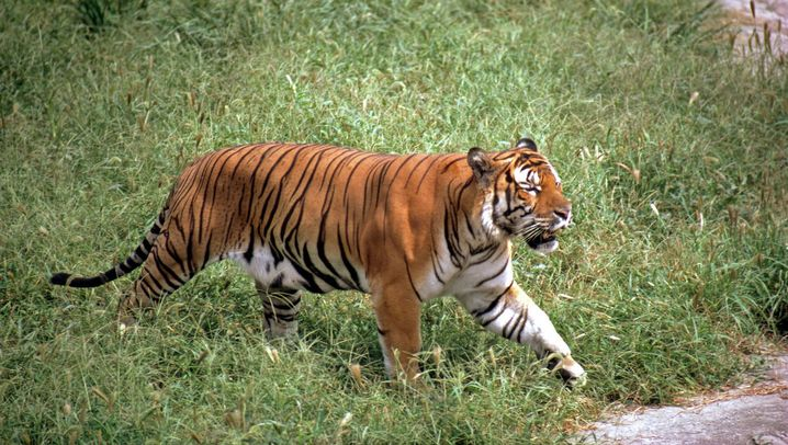 Artensterben: Gefährdete Vielfalt