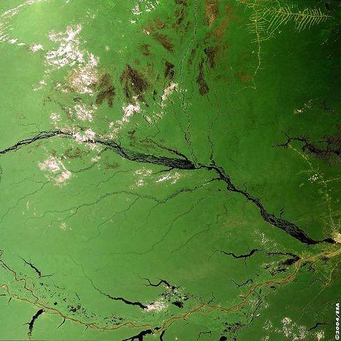 Amazonasbecken in Brasilien: Der Regenwald schrumpft