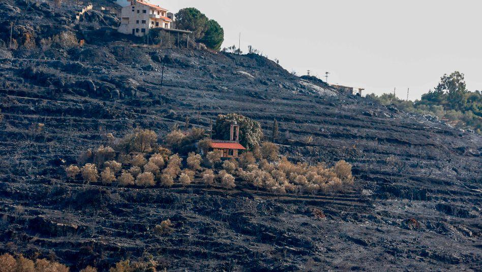 Verbrannte Hügel nahe Stadt Tartus (Foto vom Sonntag)