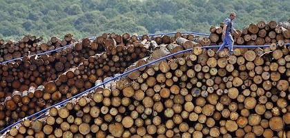 Some might see lumber. A new company in eastern Germany sees car fuel.
