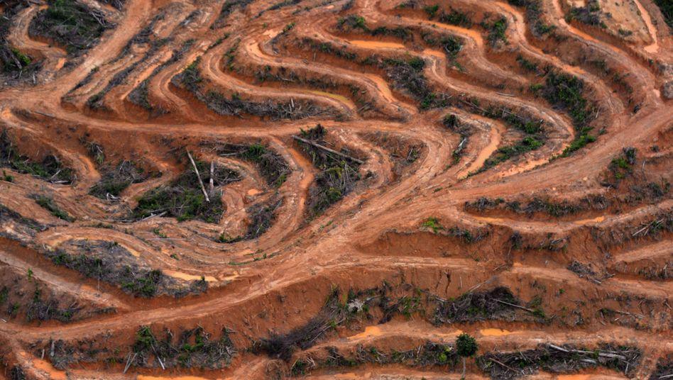 Gerodeter Wald auf der Insel Borneo