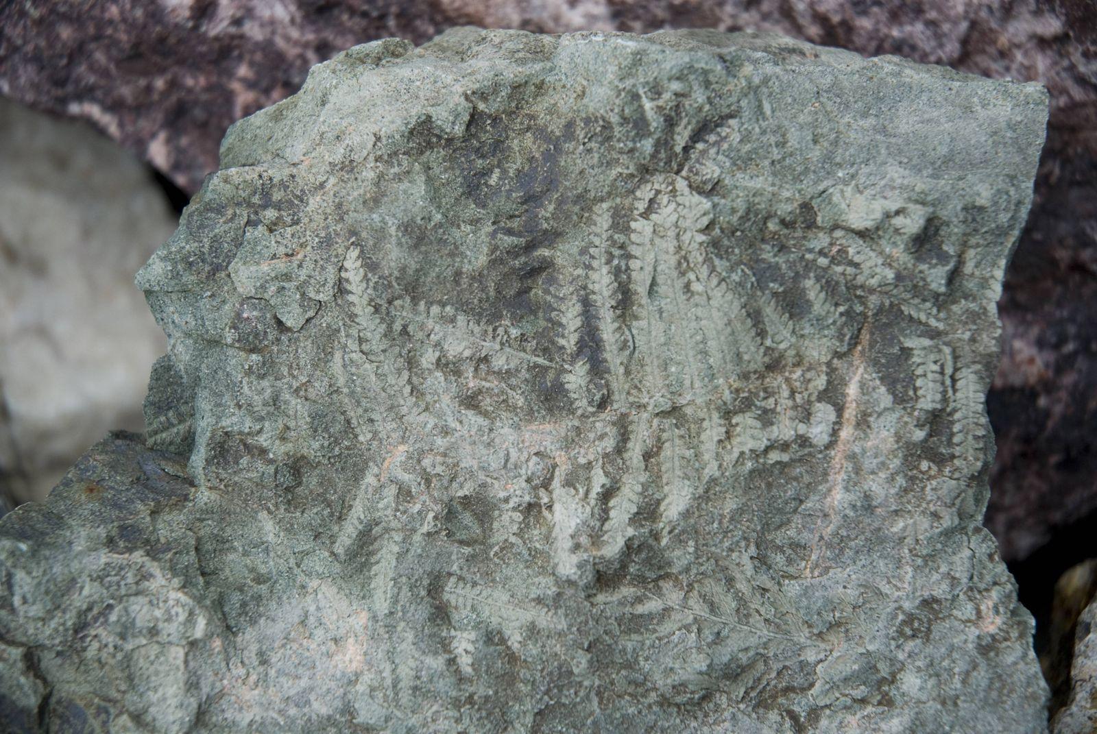 EINMALIGE VERWENDUNG Pliozän