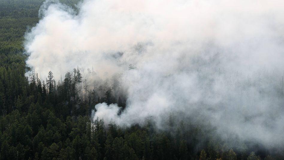 Aufnahmen der Brände vom August vergangenen Jahres rund 400 Kilometer nordöstlich der sibirischen Regionshauptstadt Krasnojarsk. Aktuelle Aufnahmen gibt es bisher noch nicht.