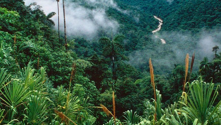 Intakter Regenwald in Costa Rica: Der Schutz der Natur soll profitabel werden