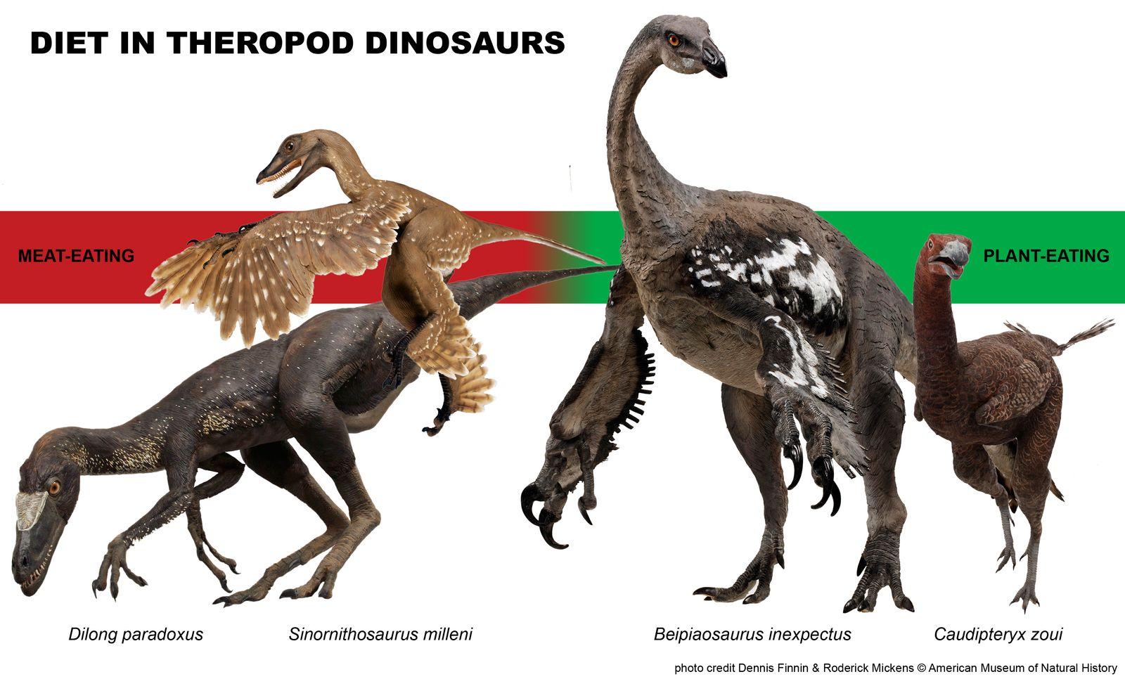 EINMALIGE VERWENDUNG Theropod / Ahnen der Vögel