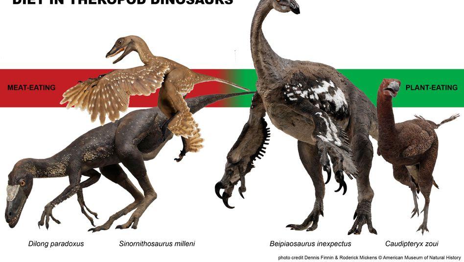 Beipiaosaurus inexpectus (Illustration): Wie ernährten sich die Vogelvorfahren?