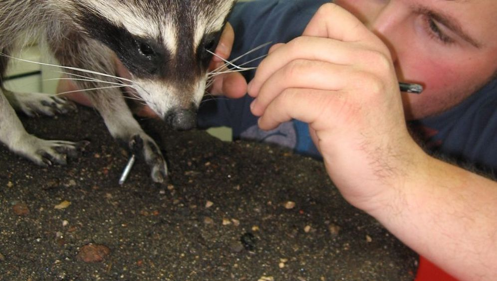 Tierpräparator mit 18: Tierlieb über den Tod hinaus