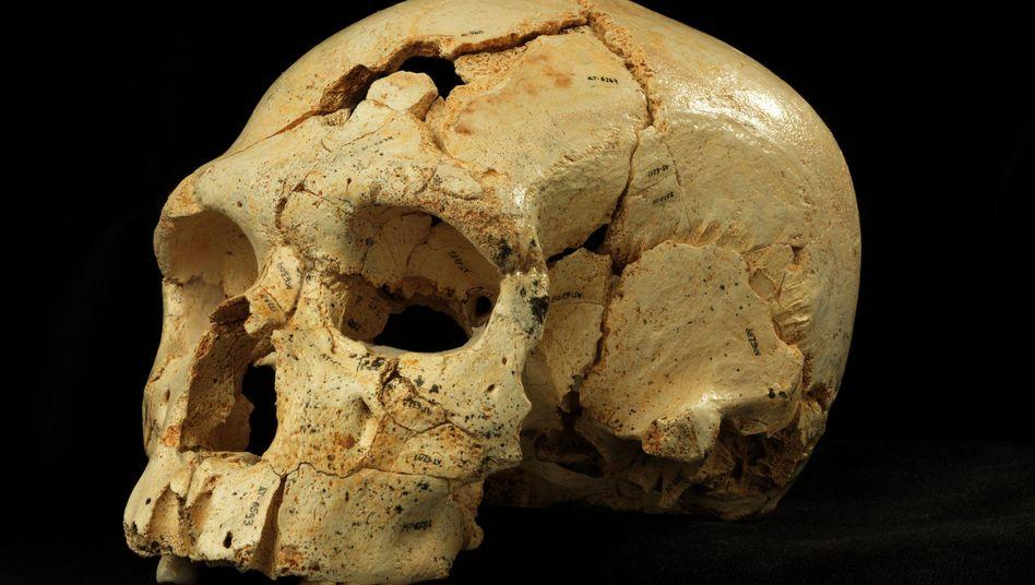Schädel aus Spanien: Zähne und Gesicht wie bei einem Neandertaler