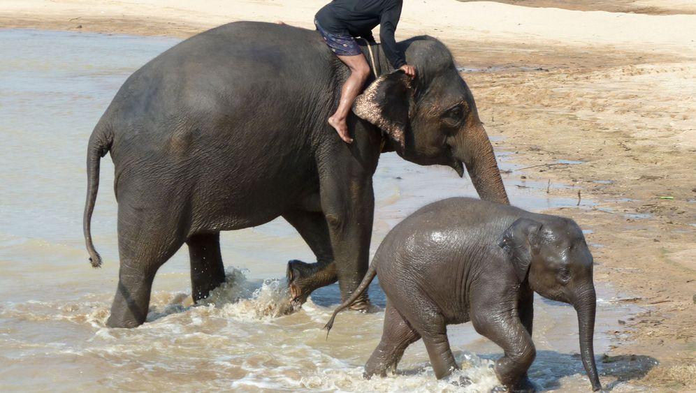 Elefantenpark in Thailand: Tänzchen vor Touristen