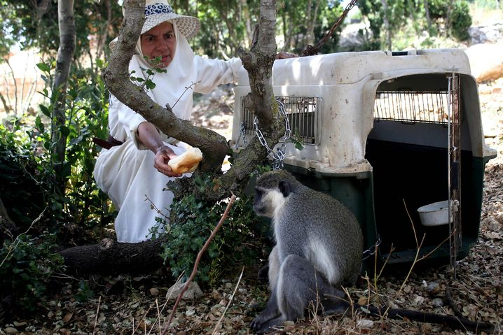 Affe Tachtouch nach seiner Rückkehr in den Libanon