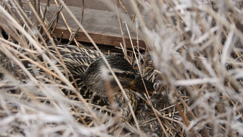 Photo Gallery: Nesting Instinct