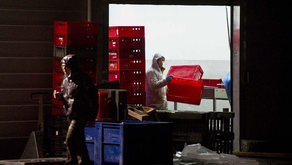 Angestellte von Willy Selten: Pferdefleisch als Rindfleisch ausgegeben