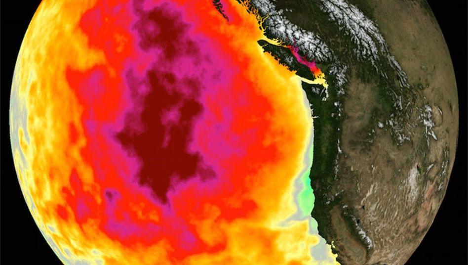 """Der """"Blob"""" im Satellitenbild: Die warmen Wassermassen hatten sich von Alaska nach Süden ausgebreitet"""
