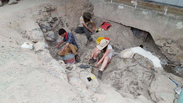 Ausgrabung im Cleveland-Lloyd Dinosaur Quarry: Knochen dicht an dicht