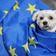 Schweiz verschärft Einreiseregeln für britische Haustiere