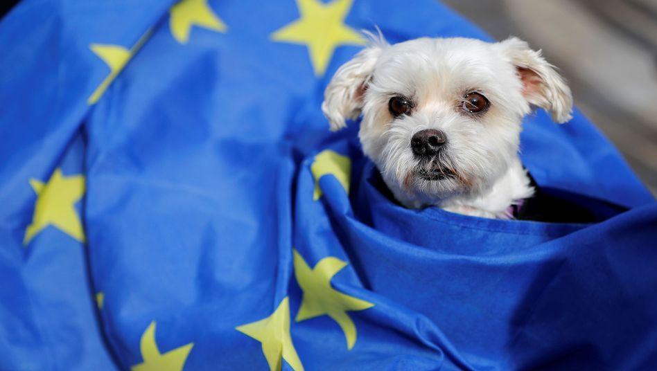 Hätte es bei einem Verbleib Großbritanniens in der EU einfacher gehabt: Hund bei einer Demonstration in London (Archivbild)