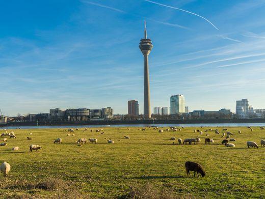 Wie sieht sie aus, die richtige Mischung aus Urbanität und Natur? Rheinufer in Düsseldorf