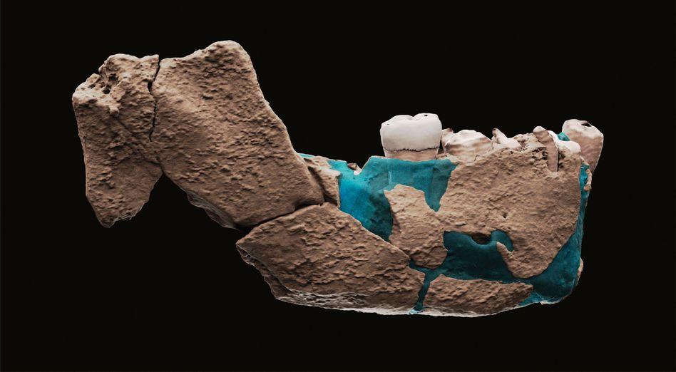 Eine virtuelle Rekonstruktion des Unterkiefers von »Nesher Ramla Homo«