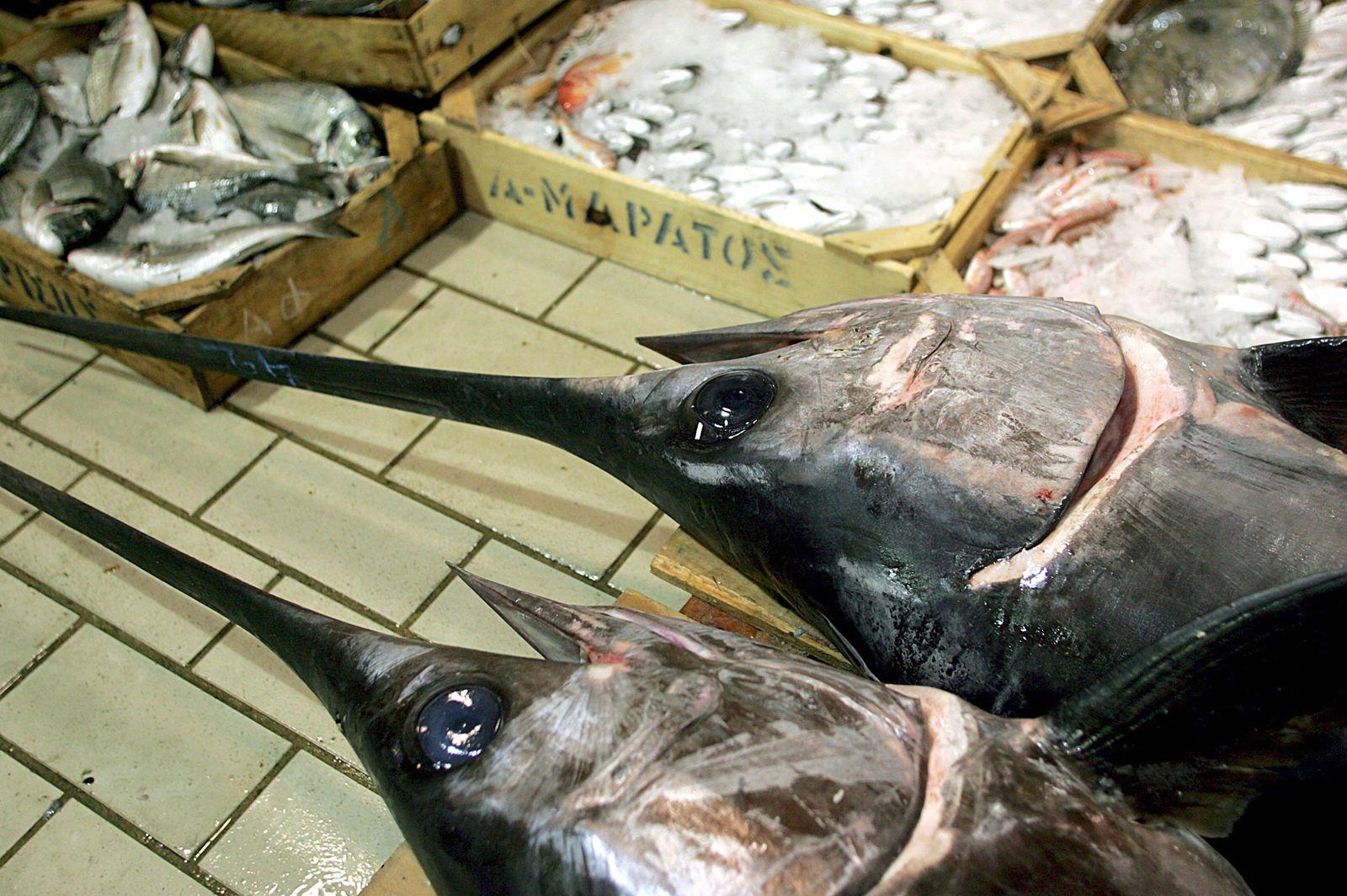 SPERRFRIST, 10. JULI 18.00 UHR/ Im Mittelmeer schrumpfen die Fisch-Bestände